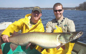 DNR fisheries biologists Brad Fink and Keith Bikowski hold one of the monster Webster Lake muskies trapped by the DNR this spring. The spring fish surveys show the 774-acre natural lake in the northeast corner of the state contains over 5,000 adult muskellunge. Some fish measured more than 50 inches long!