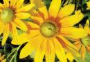 MIDSUMMER GARDENING CHECKLIST – Green-Thumb Gardener