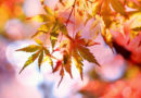 FALLING INTO AUTUMN – News From The Hills