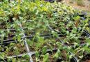 PLANNING FOR SPRING – Green-Thumb Gardener