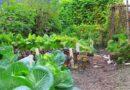 APRIL IS NATIONAL GARDEN MONTH – Green-Thumb Gardener