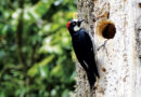 BIRDS ARE IN DECLINE – Life In The Outdoors