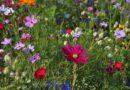 FLOWERING PLANTS FOR A BRIGHT SUMMER DAY – Green-Thumb Gardener